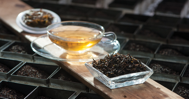dilmah-tea-estate
